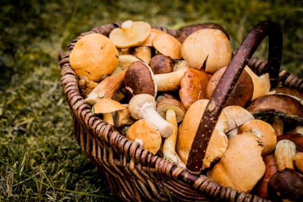 brown basket full of forest mushrooms