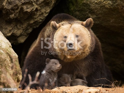 Brown bear with her cubs