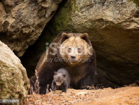 Brown bear with her cub