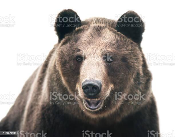 Brown bear picture id519458317?b=1&k=6&m=519458317&s=612x612&h=lmufqbcgpii19y0r hv ehh7z cwtnsdxxt if9zuw8=
