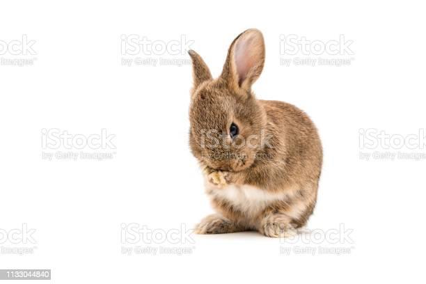 Brown bunny baby on white background picture id1133044840?b=1&k=6&m=1133044840&s=612x612&h=afzpla 4hkxqhli4spz1grwpdsjzqe6lsapotxdmcju=