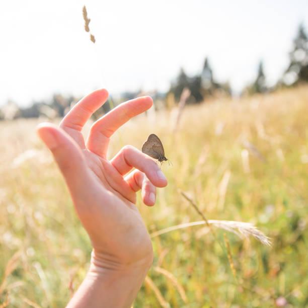 Brown butterfly on woman hand on a sunny summer day with fields in picture id1027169356?b=1&k=6&m=1027169356&s=612x612&w=0&h=ncw ky3fka5bdbpxlccasryifb6fij5ccnb5lqdtboq=