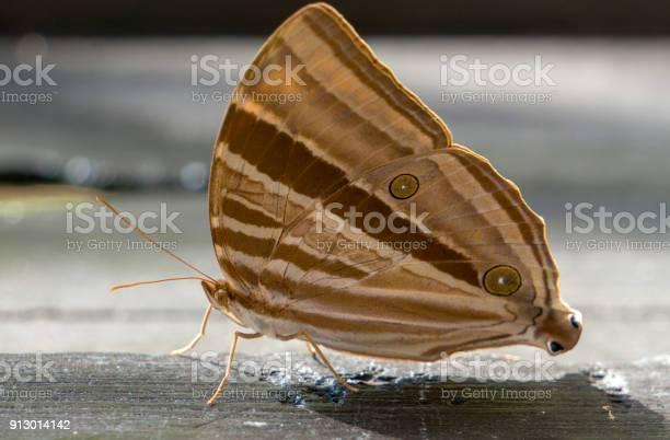 Brown butterfly on wood plate picture id913014142?b=1&k=6&m=913014142&s=612x612&h=kfftsq5muhfj8w6gsadhjrkfwz0bxun5pznxi9m3q9s=