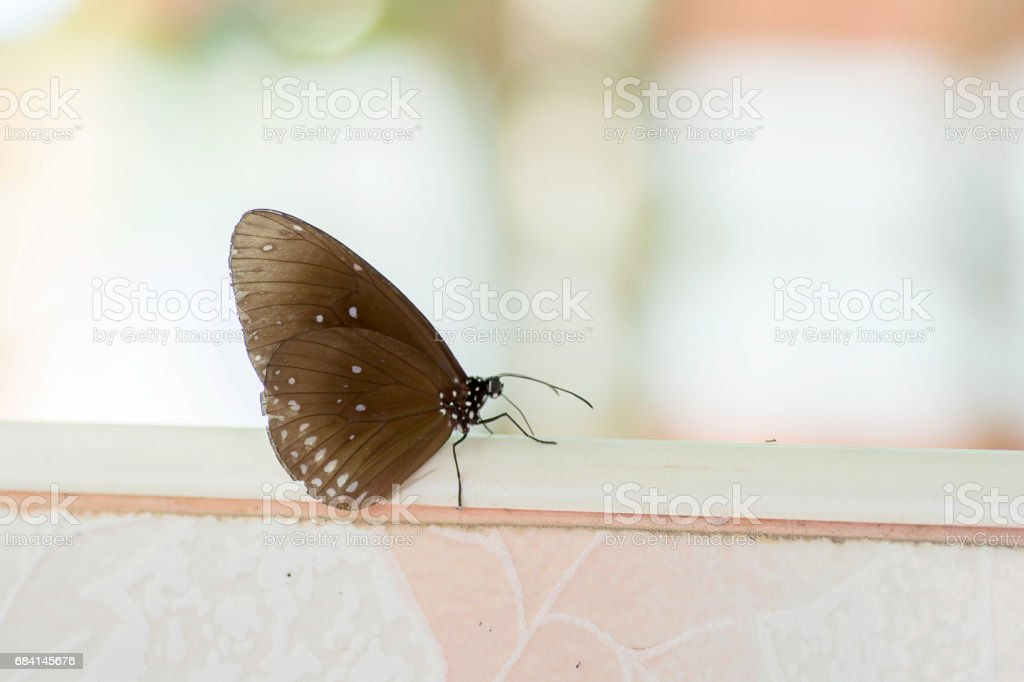 Brown butterfly perched at the terrace photo libre de droits