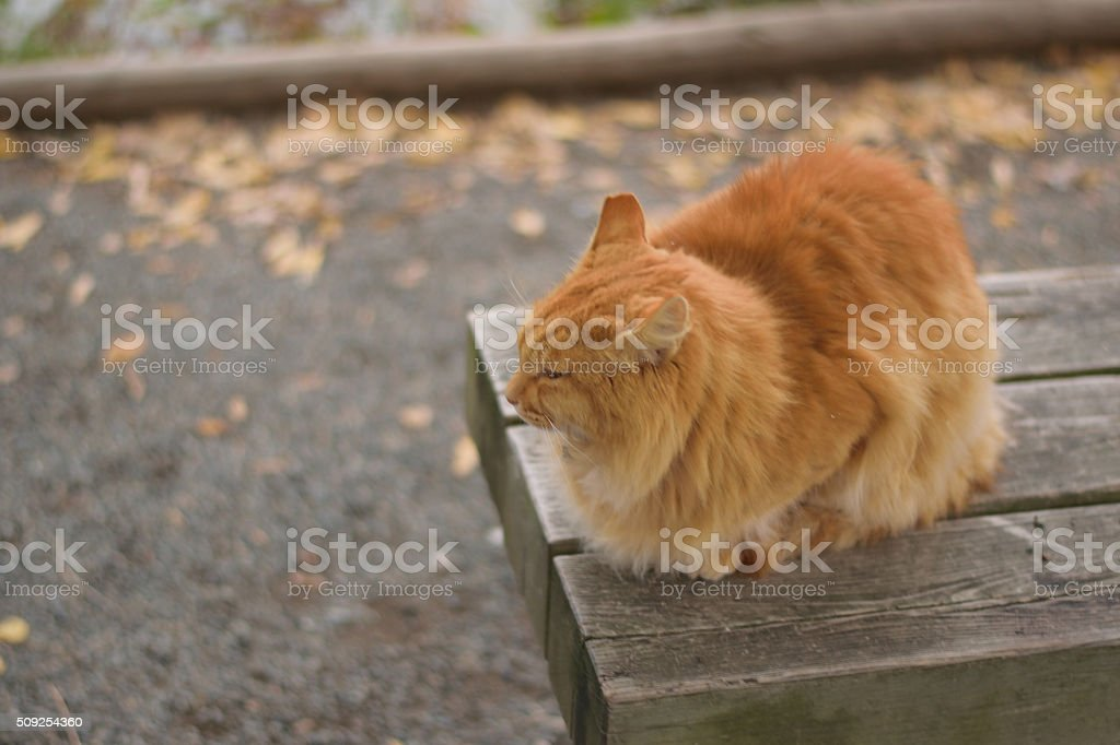 Brown Cat relaxing on Autumn bench stock photo