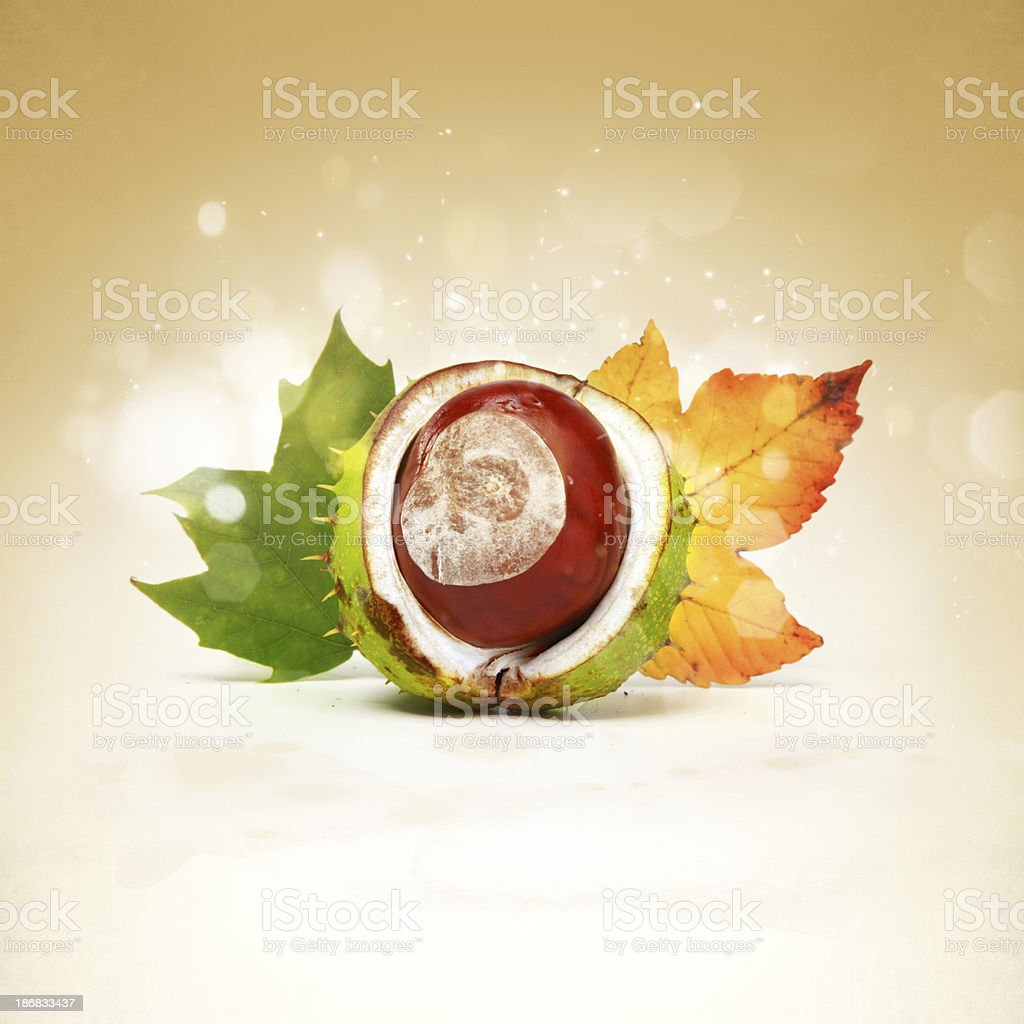 Brown chestnut with colorful leaves royalty-free stock photo