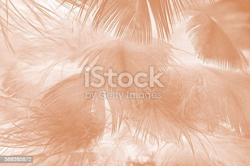 istock Brown color trends feather texture abstract background 588385872