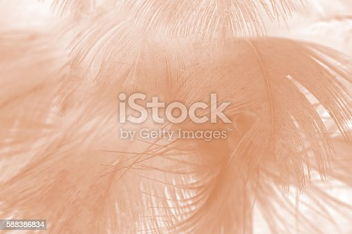 istock Brown color trends feather texture abstract background 588386834