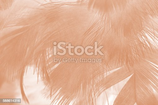 istock Brown color trends feather texture abstract background 588614316