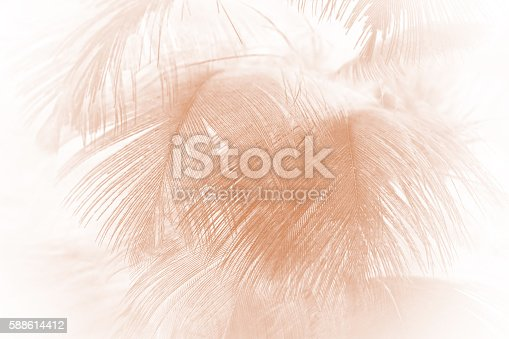 istock Brown color trends feather texture abstract background 588614412