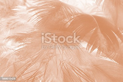 istock Brown color trends feather texture abstract background 588615426