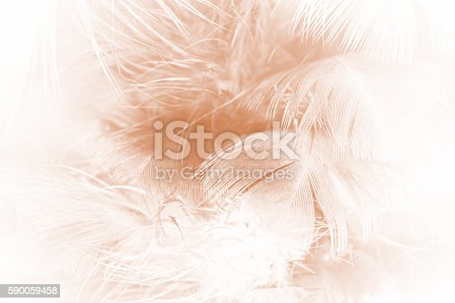 istock Brown color trends feather texture abstract background 590059458