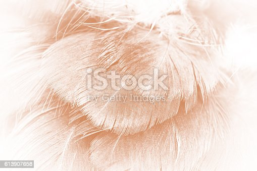 istock Brown color trends feather texture abstract background 613907658