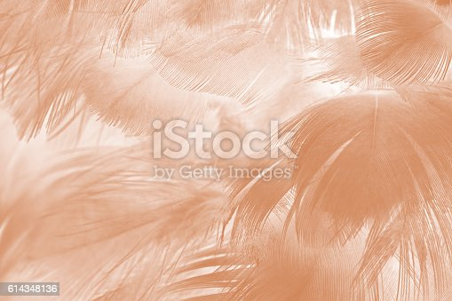istock Brown color trends feather texture abstract background 614348136