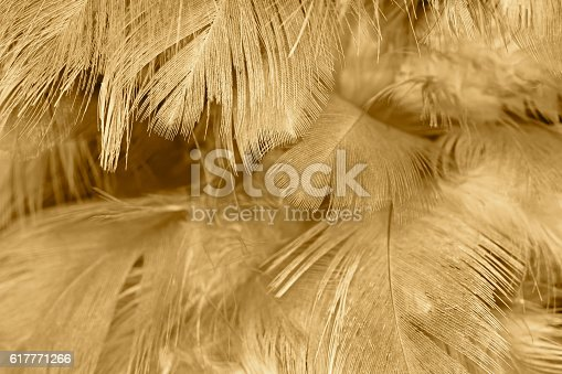 istock Brown color trends feather texture abstract background 617771266
