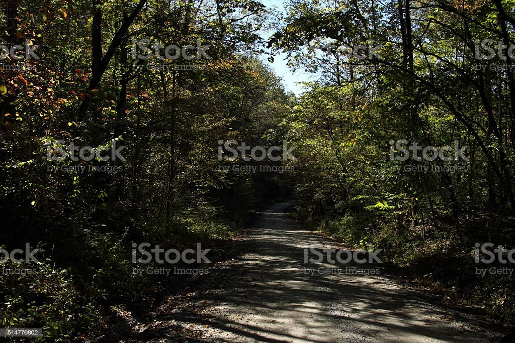 Brown County Indiana Yellowwood State Forest Stock Photo & More