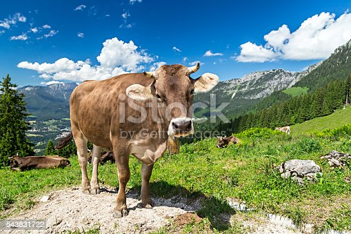 brown cow in front of mountain landscape