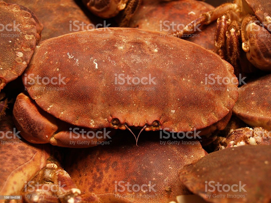 Brown crabs royalty-free stock photo