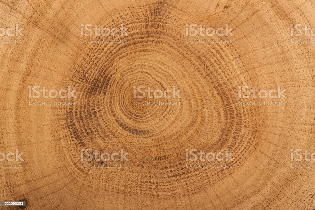 brown cut of tree stock photo