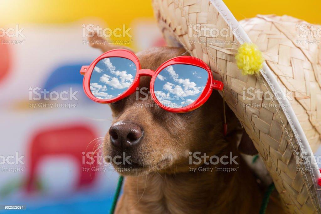 cachorro marrom de óculos vermelhos e um chapéu de palha sobre um fundo multi colorido, reflexo em óculos de céu com nuvens, o conceito de viagens, lazer e turismo - Foto de stock de Animal royalty-free
