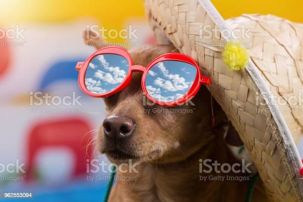 Foto de Cachorro Marrom De Óculos Vermelhos E Um Chapéu De Palha Sobre Um Fundo Multi Colorido Reflexo Em Óculos De Céu Com Nuvens O Conceito De Viagens Lazer E Turismo e mais fotos de stock de Animal