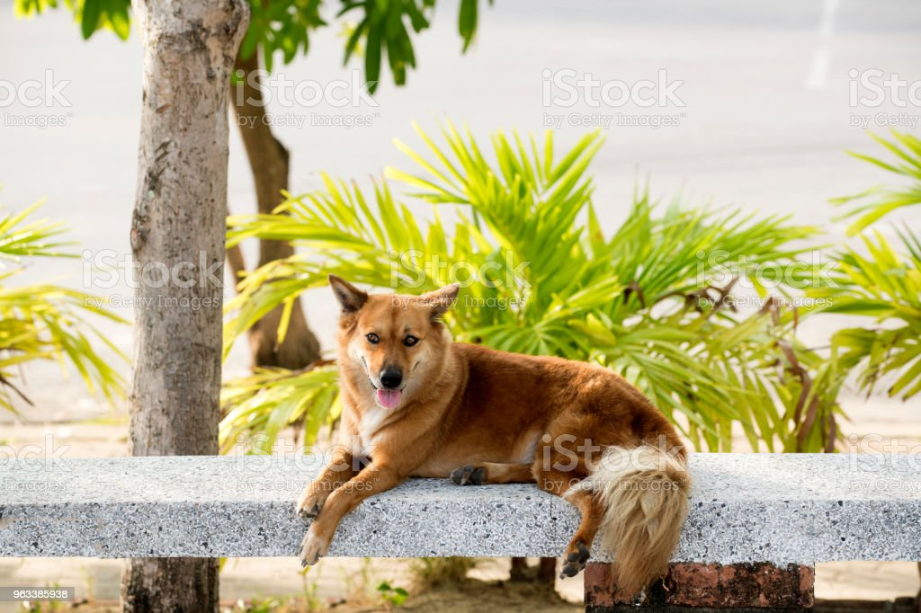 Brun hund - Royaltyfri Asien Bildbanksbilder