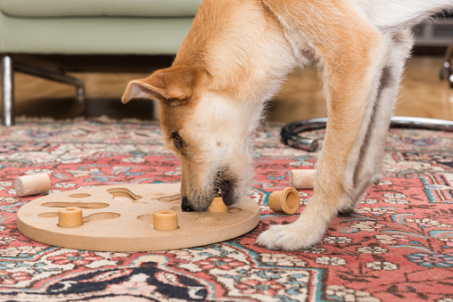 Brown Dog Stands At Dog Puzzle Stock Photo - Download Image Now