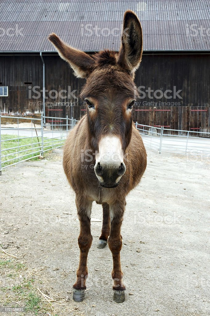 Brown Donkey stock photo