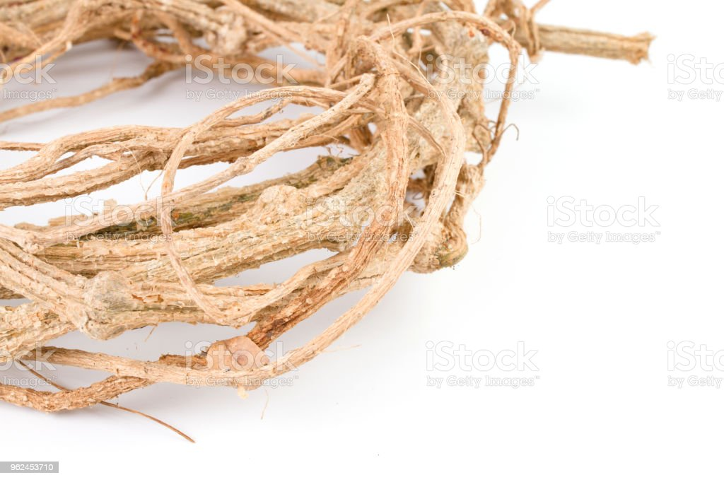 Brown dry Vines coiled in a circle look. stock photo