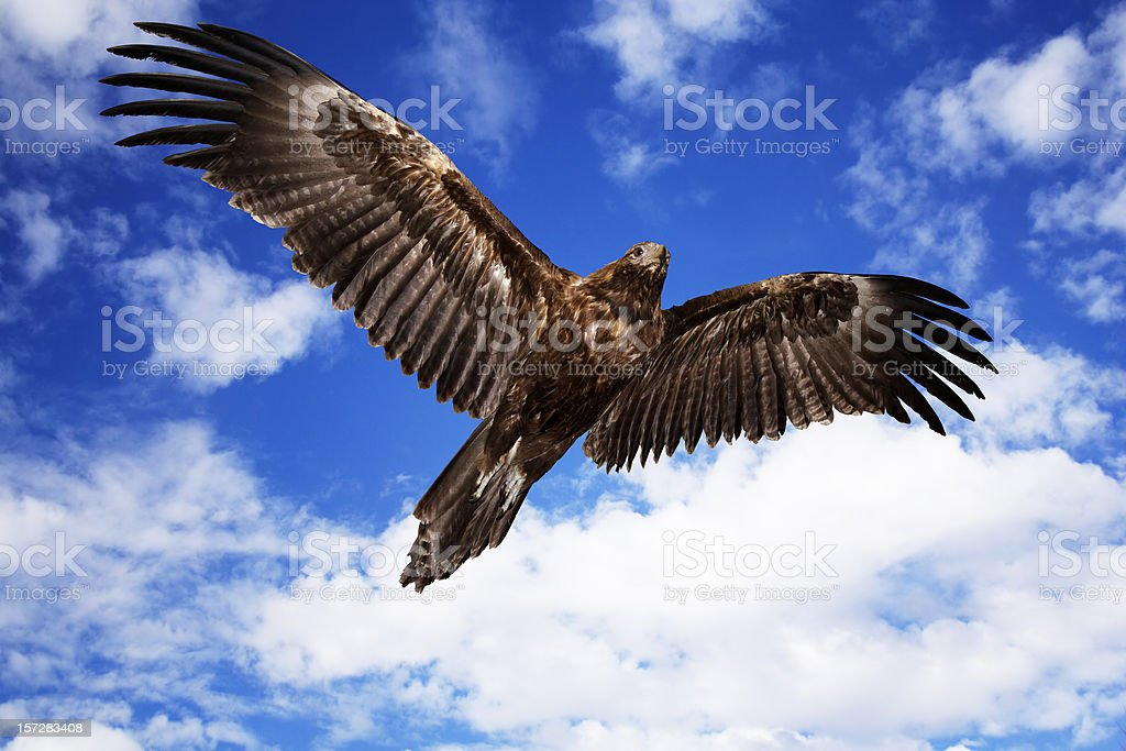 brown eagle royalty-free stock photo