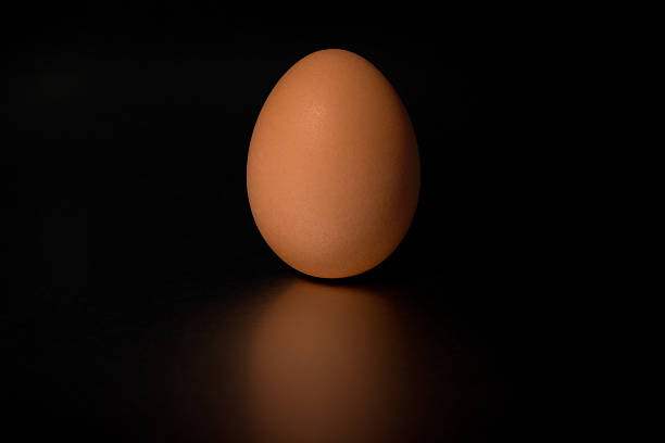 Brown egg with black background stock photo