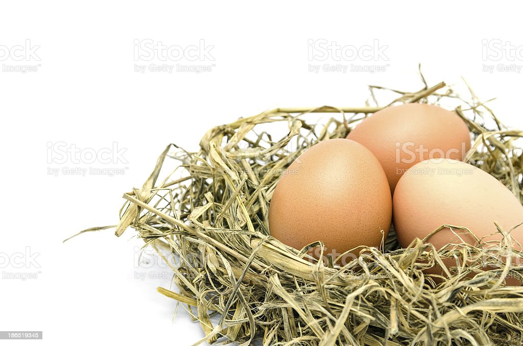 Brown eggs in a nest isolated on white background royalty-free stock photo