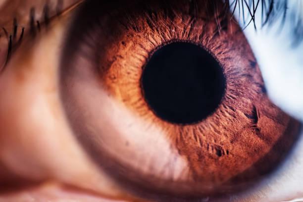 Braunes Augen-Makro – Foto