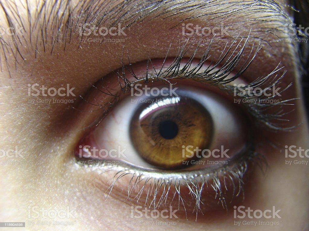 Brown eye stock photo