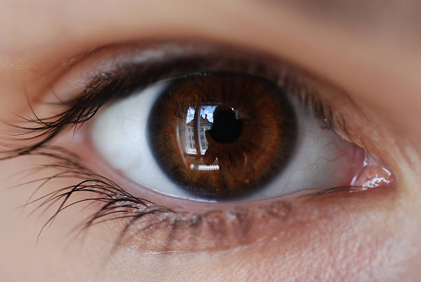 Top 60 Brown Eyes Stock Photos, Pictures, and Images - iStock