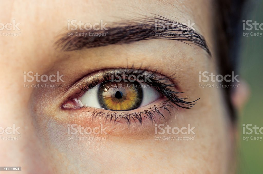 Brown female eye stock photo