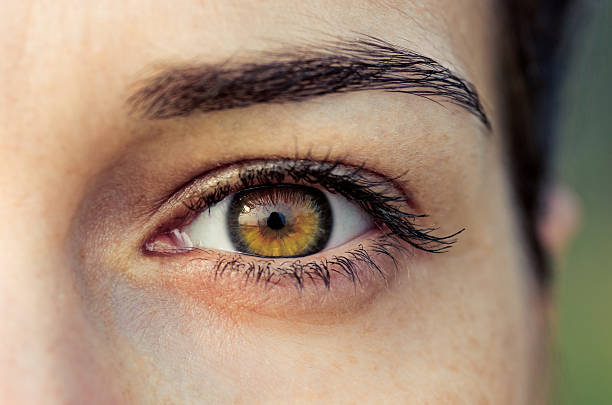 brown female eye - close to stock pictures, royalty-free photos & images