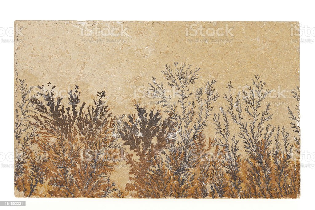 Brown fossil flowers on white stock photo