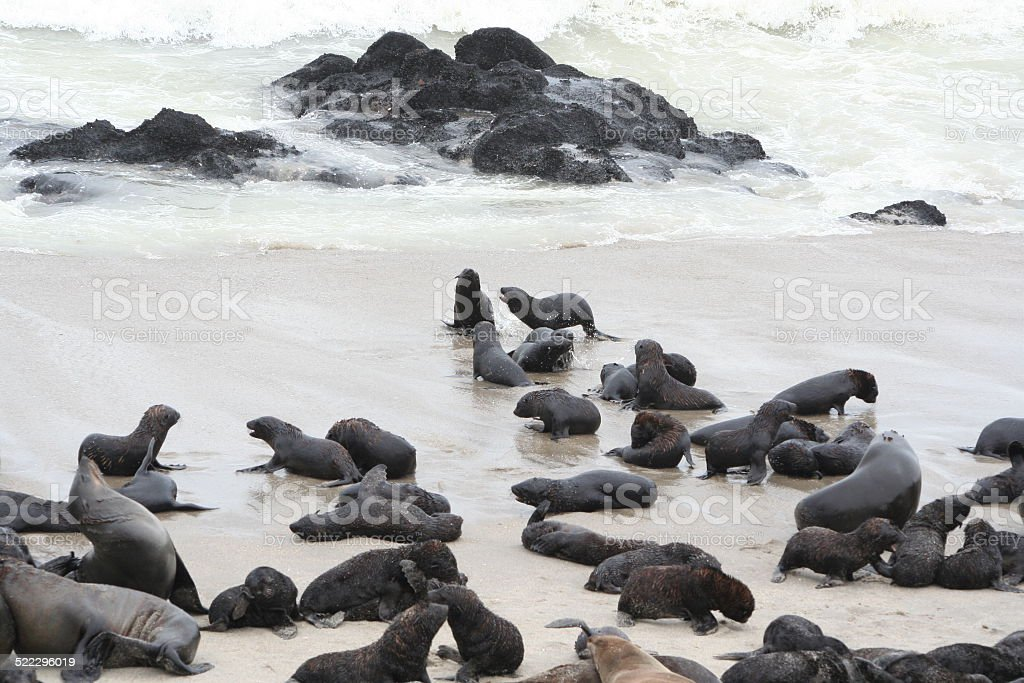 Brown Fur Seal Colony at Cape Cross, Skeleton Coast, Namibia stock photo