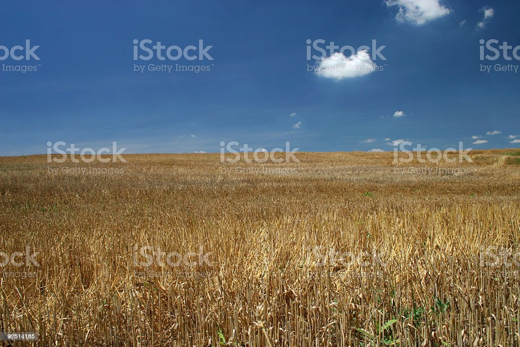 Brown Grass, Blue Sky stock photo