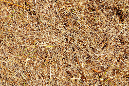 Horizontal composition color photography in full frame of close-up of brown grass and straw, textured dried plant in bad condition and burned by the temperature and the sunlight in summer season (or autumn, fall) during a heat wave. Background with large copy space shot with no people, element ready for design.