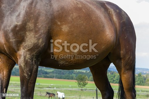 brown horse at a paddock with green lawn and blue sky in south germany rural countryside