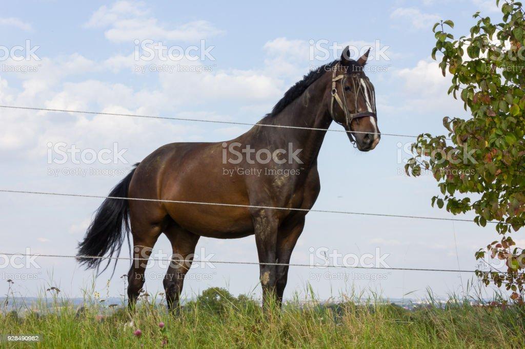 brown horse at a paddock stock photo