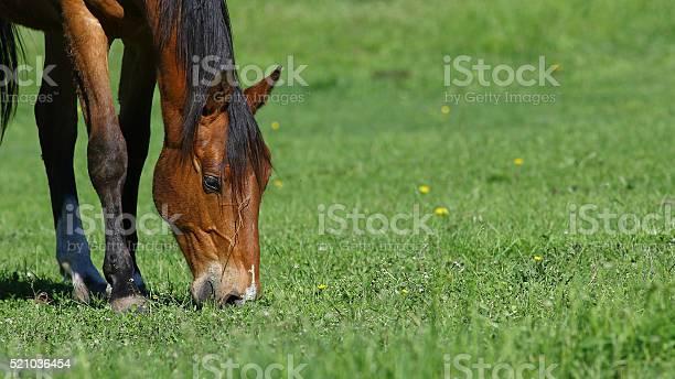 Brown horse background picture id521036454?b=1&k=6&m=521036454&s=612x612&h=gseyoadenla2rorgbykt99coz7oykjmpvvghsv3 3p0=
