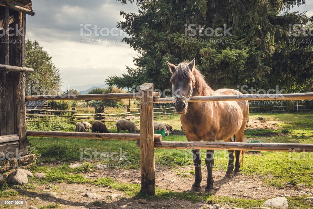 Brown Horse behind a Wooden Fence at Sunset stock photo