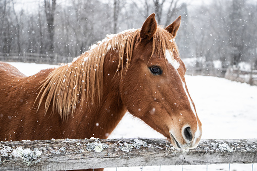 Brown horse behind fence