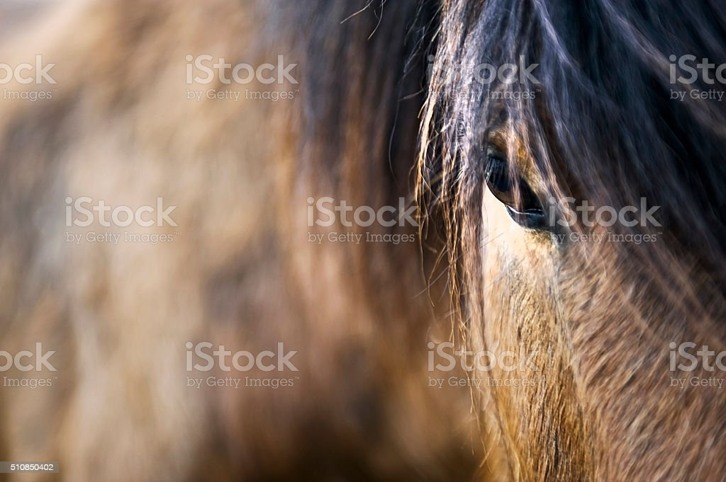 Brown horse close up stock photo