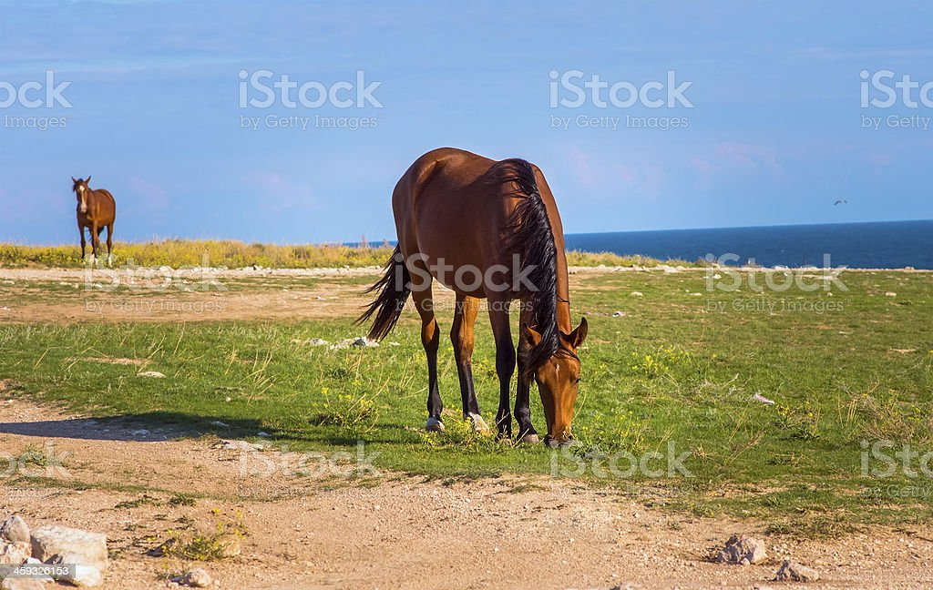Brown Horse Farm Animal pastured on Green Valley royalty-free stock photo