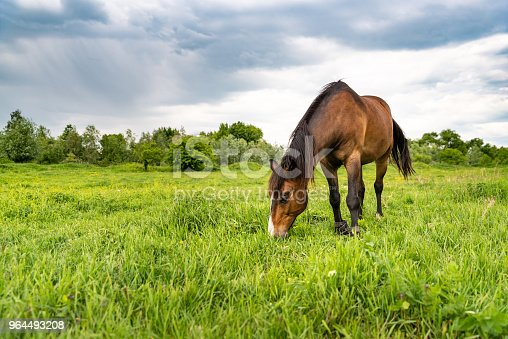 Brown horse grazing in a meadow, beautiful rural landscape with cloudy sky. Stories about rural life in Ukraine