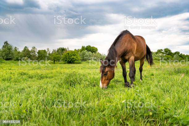 Photo of Brown horse grazing in a meadow, beautiful rural landscape with cloudy sky
